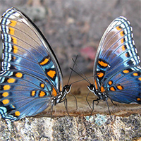 love-butterfly-couple